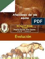 Clase Pie Equino 2013