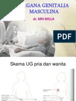 Organa Genitalia Masculina