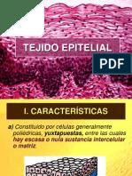 Tejido Epitelial Completo New