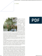 Arbol leucaena (lino criollo) un recurso ganadero. _ La Educación Agrícola