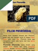 Phoronida