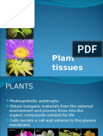 [BIO] 04 - Plant Tissues (Calsado)