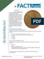 FactSheet-Acinetobacter
