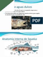 Clase 11. Biosistematica. Peces.3.