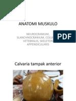 Anatomi Muskulo by Mutia