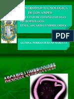 Ascaris Lumbricoides-Mariluz Porras