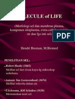 Molecule of Life (Hb)-1,2-Morfologi