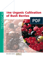 The Organic Cultivation of Bush Berries