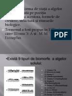 biomorfe