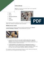 Multiplicación de Plantas bulbosas.doc
