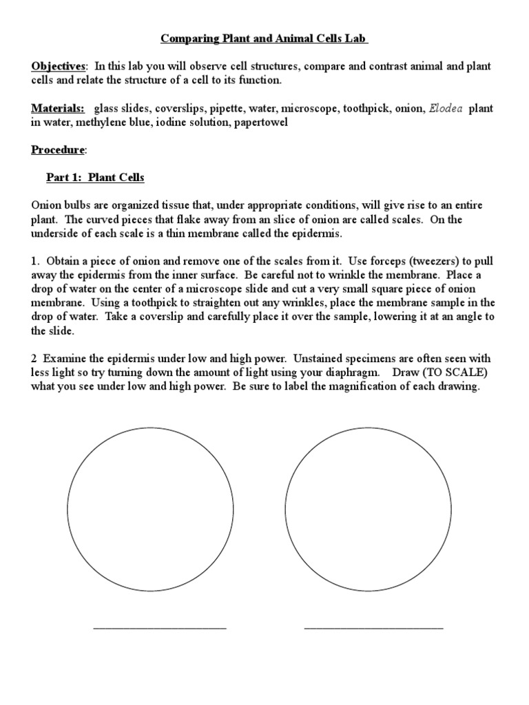 Worksheets Comparing Plant And Animal Cells Worksheet comparing plant and animal cells lab 1 staining onion