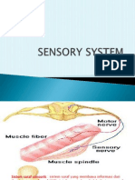 (2.2) Sistem Saraf Sensorik