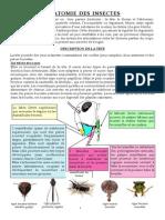Anatomie Des Insectes