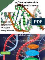 Peranan DNA Mitokondria Pada Analisis Genetik Hewan