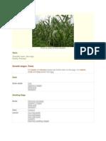 Natural Enemies of Corn Pests