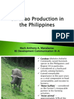 Carabao Production in the Philippines