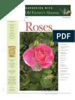 Rose Guide 4702