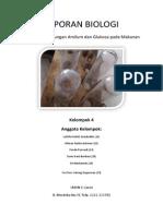 Laporan Biologi Amilum Glukosa
