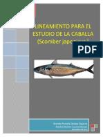 Lineamientos Caballa - Copia