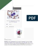 Monocytes Wikipedia