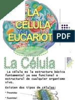 3° celula eucariotica