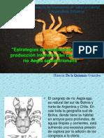 5 Presentación AEGLA SEPTENTRIONALIS