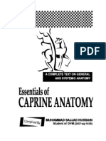 Essentials of Caprine Anatomy