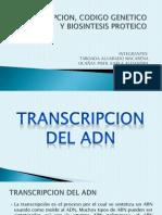 Transcripcion Del Adn _ Exposicion