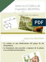 Estimulantes en El Cultivo de Tejidos Vegetales