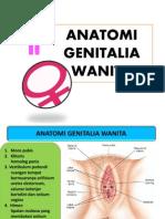 Anatomi Genitalia Wanita