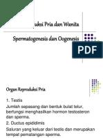 Organ Reproduksi Pria Dan Wanita .ppt