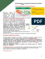 TEMA 3  DE BIOLOGIA – TRANSFORMAÇÃO E UTILIZAÇÃO DE ENERGIA PELOS SERES VIVOS