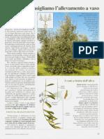 Olivo e kaki - coltivare e potare
