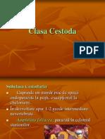 Clasa Cestoda