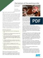 Caged Hens Factsheet