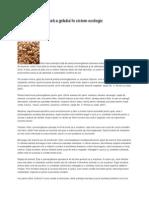 Tehnologia de cultură a grâului în sistem ecologic