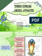 1. Tumbuh Kembang Branchial Apparatus