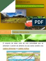 MM-8ano-cadeiaseteiasalimentares-111120045507-phpapp01.pdf