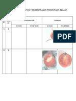 Tugas Pengamatan Fisiologi Pasca Panen Pada Tomat