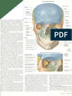 netter neuroanatomia en español