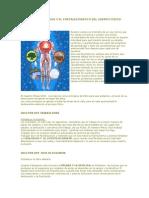 LOS 5 PRINCIPIOS Y EL FORTALECIMIENTO DEL CUERPO FÍSICO.doc