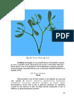 parul.pdf