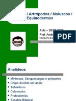 Anelideos Moluscos Artrpodos Equinodermos