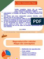 reprocelular_b2