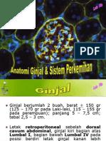 Anatomi Ginjal New