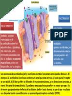 Receptores Colinergicos(Modificado Jeje)