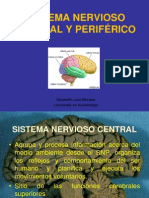Clase 1 Sistema Nervioso