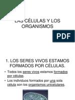 LAS CÉLULAS Y LOS ORGANISMOS 2