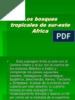 Los Bosques Tropicales Sud-este Africa
