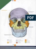 Atlas de anatomía - pag 58 a 67